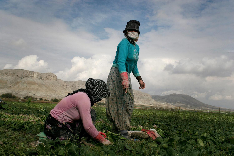 Seasonal Agriculture Workers, 2007