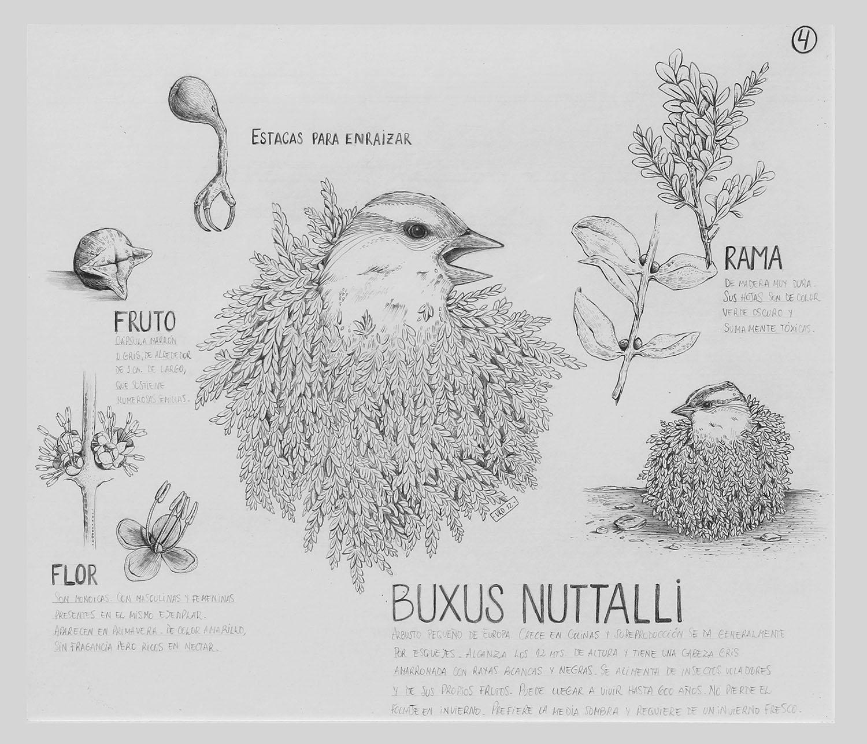 """Buxus Nutalli, de la serie """"De otros Mundos"""" - Grafito s_papel, 35x30cm. 2012"""